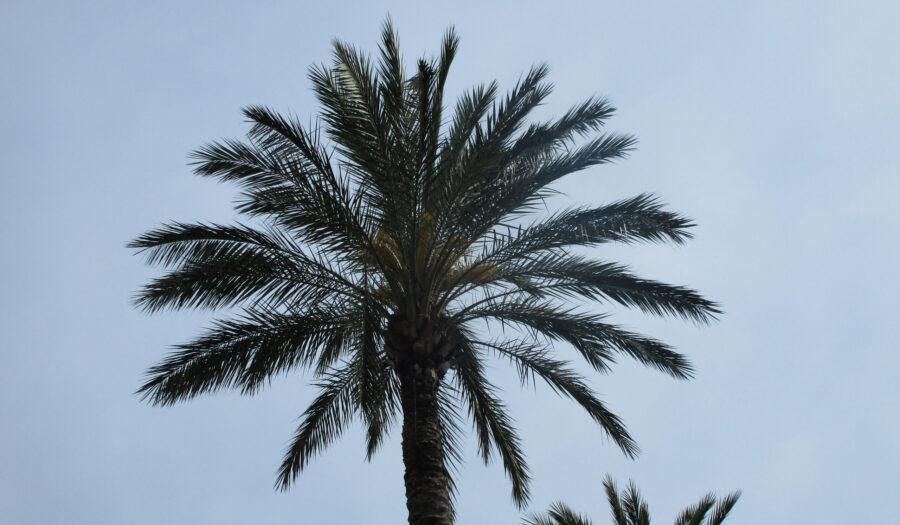 Palm Sunday, 2017
